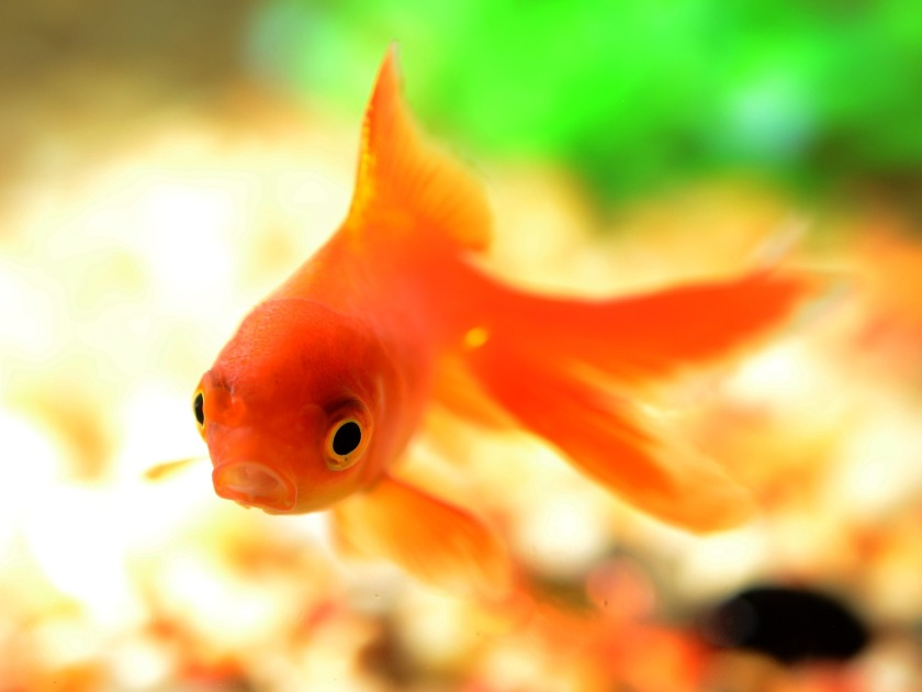 fish-881161_1920